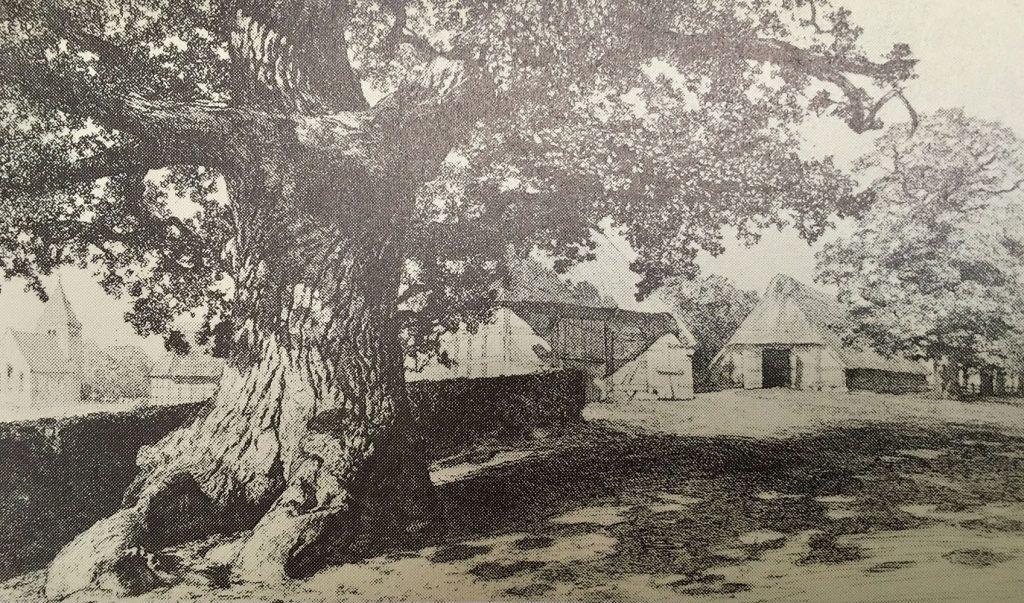 Künstlerdorf Dötlingen: Georg Müller vom Siel, Dötlingen mit alter Eiche, 1904, Radierung auf Karton, 19,9x33,3cm